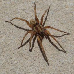 Уничтожение пауков в Городищах